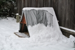 chicken coop covered in snow